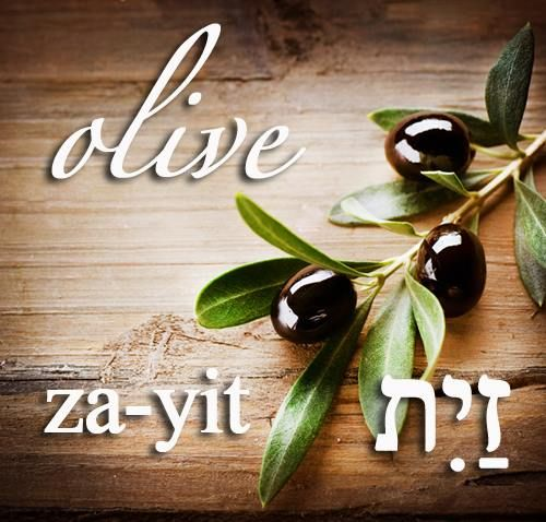 Hebrew Word of the Day (olive)